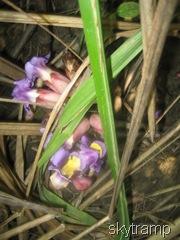 Iцветы джунгей
