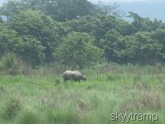 вот и носорог!!!!
